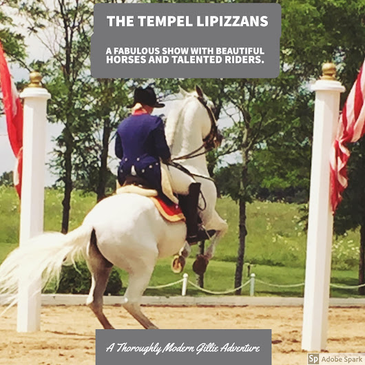 Enjoy the Tempel Lipizzans Horse Show ⋆ Thoroughly Modern Gillie