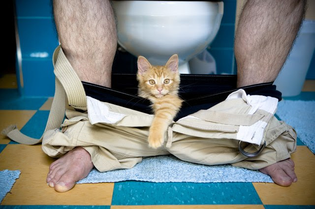 Why Do Cats Paw Under Bathroom Doors?