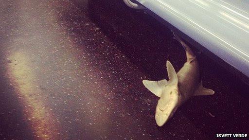 Καρχαρίας στη Νέα Υόρκη μετρό