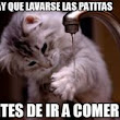 Imagen: 51 best images about Gatos con frases on Pinterest | Animales, Tes ...