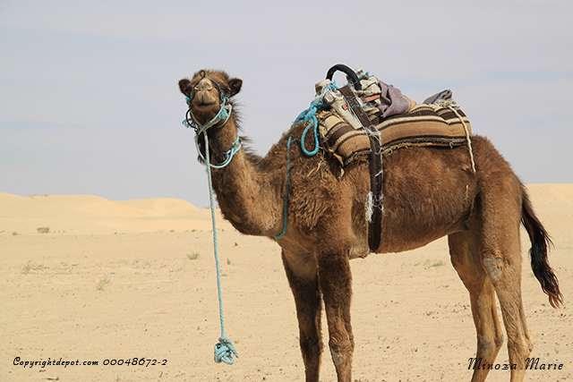 Sud Tunisien... diaporamas...