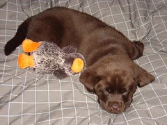 Nash first day home