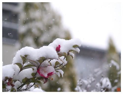 Snow 080209 #01