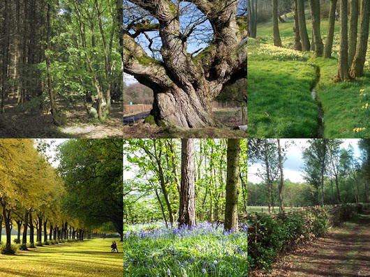Give ancient woodland better protection
