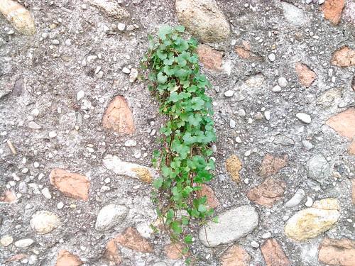 Muro, c'è il verde che cresce by Ylbert Durishti