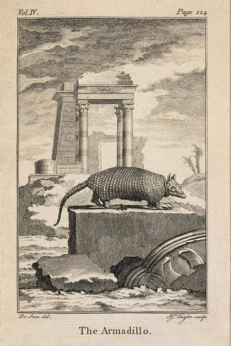 Armadillo IN 'An History of the Earth..' Oliver Goldsmith, 1774 (Rylands)