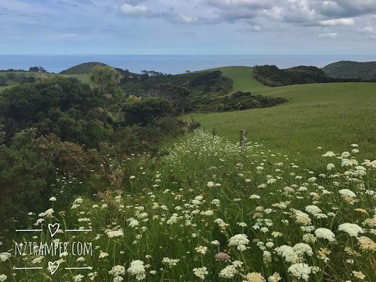 Trail running – The Cascades to Piha Loop in Waitakere Auckland, Tramping & Trail Running in Auckland, NZ