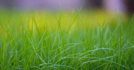 5 Essential Tips to Maintaining a Healthy Lawn | Woodsman Tree Service