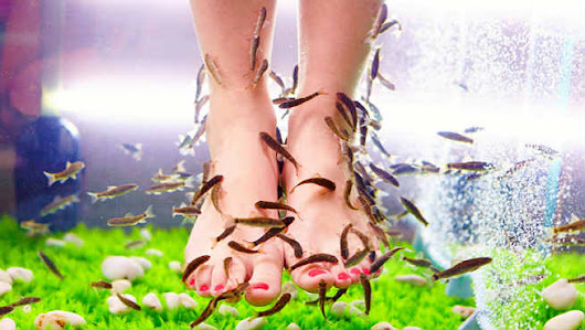Fish Pedicures (Garra Rufa) - Benefits & Side Effects - - What to Know Before you Go