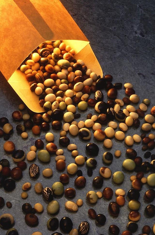 Geneeskrachtige planten! Sojabonen gezond maar toch maar minder