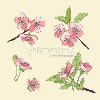 Conjunto Cherry Blossoms Flor De Cerezo Flores De Primavera Dibujo