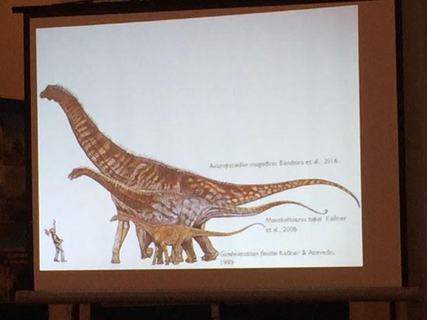 Animal pode ser classificado no grupo dos titanossauros (Foto: Cristina Boeckel / G1)
