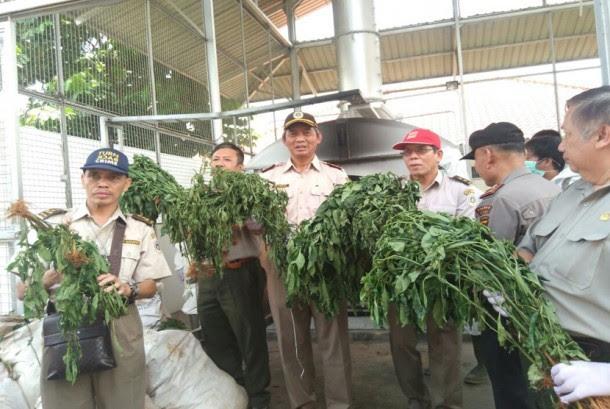 Pemusnahan bibit dan tanaman cabai ilegal yang mengandung bakteri, Instalasi Karantina Balai Besar Karantina Pertanian Soekarno-Hatta, Kamis (8/12).