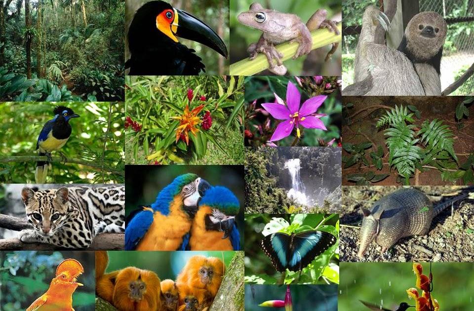 Plantas De Selva Alta: Selva Tropical Perennifolia: Factores Bióticos De La