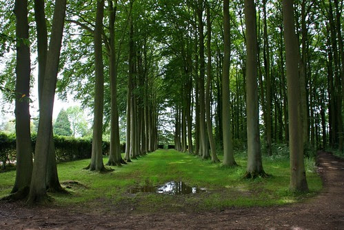 Beech Alley at Hidcote
