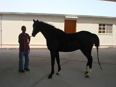 Qatar_Septmber07056