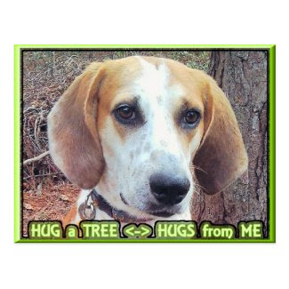 Hound Dog Tree Hugger Post Cards