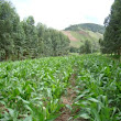 Agroforestry agriculture: produce food God's way, home or large scale – HWJDB How Would Jesus Do Business?