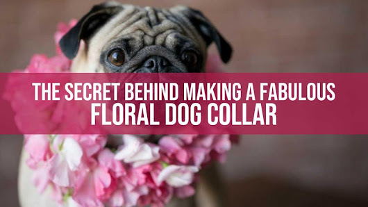 Floral Dog Collar - How To Make A Fabulous Floral Dog Collar