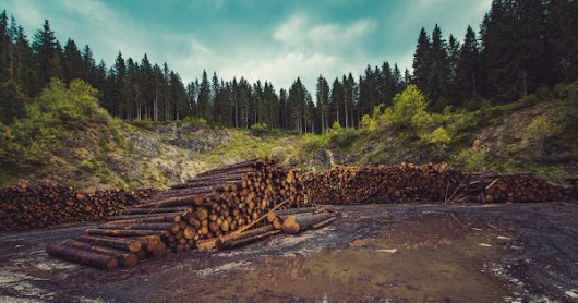 Have companies really done enough to bring an end to deforestation?