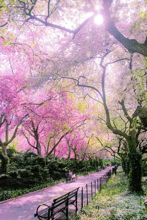 NYConservatory_GardenCentral_ParkFlowering_Trees07