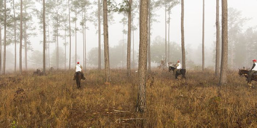 Fragile Hunting Grounds in the Southeast's 'Quail Belt' - WSJ