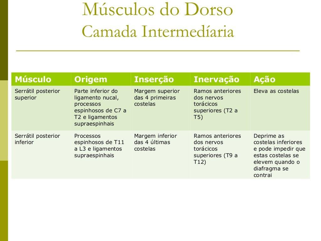 Músculos do Dorso                       Camada IntermedíariaMúsculo              Origem               Inserção          In...