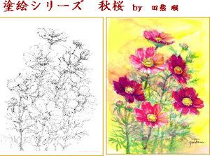秋の花 スケッチ 塗り絵 秋明菊 コスモス 塗り絵で癒し 風景画 花の絵
