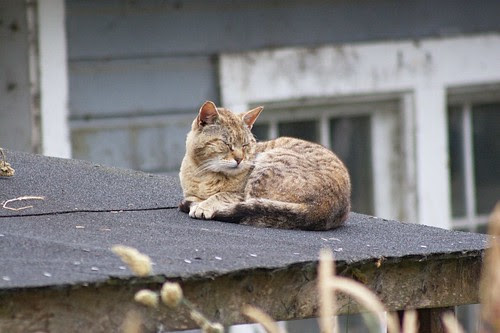 A Roof Nap
