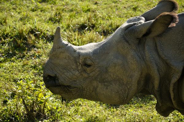 RhinoE5067
