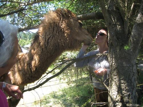 Mona the camel