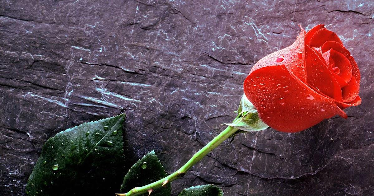 Flores - Portada para face - Fondos - Poemas - Imagenes