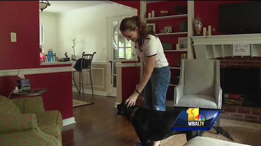 Service dogs give veterans, inmates second chance