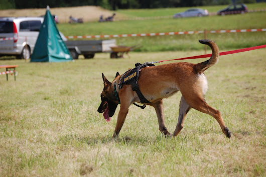 Clifton Park K9 Search & Rescue Team Looking for Volunteers