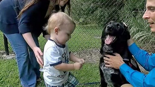Hero Dog Saves Boy from Abusive Babysitter