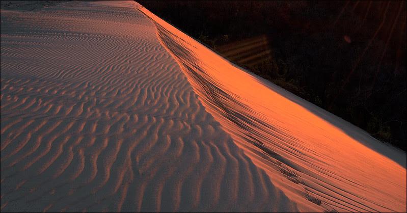 Sahara Sands?