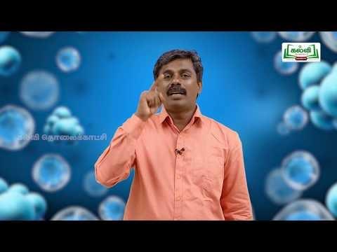 வகுப்பு 10 அறிவியல் அலகு 16 தாவர மற்றும் விலங்கு ஹார்மோன்கள் Kalvi TV