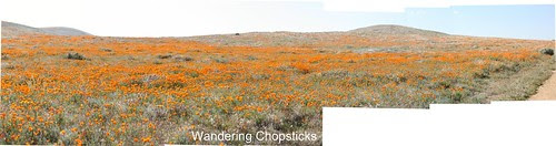 Antelope Valley California Poppy Reserve 2