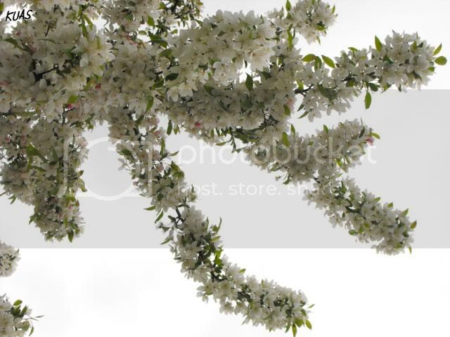white 09 flowers