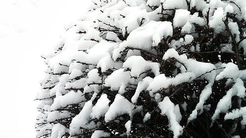 Snowy by 76003