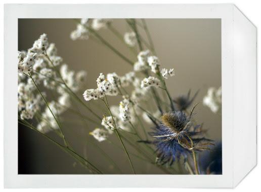 fleurs_01