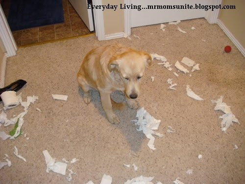 photo of a dog who just destroyed a roll of toilet paper