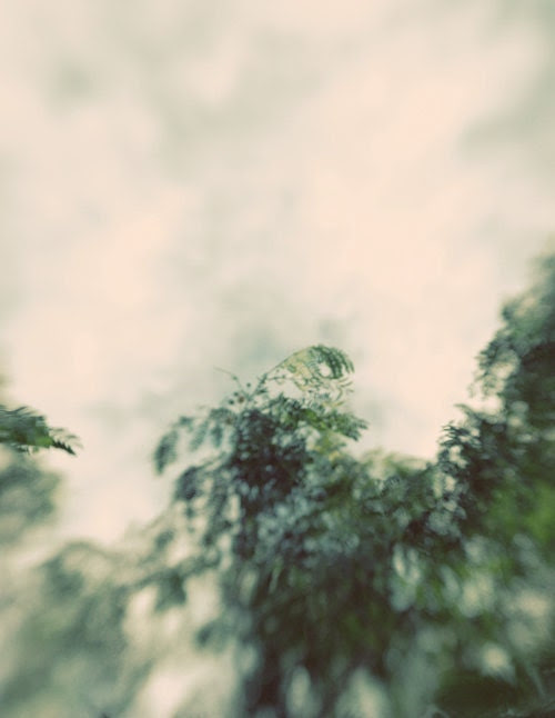 Ethereal tree photograph- grey, fall, winter, dreamy, pastel, clouds, blue green, white, surreal, bokeh, sky, fine art photo, 8x10 print