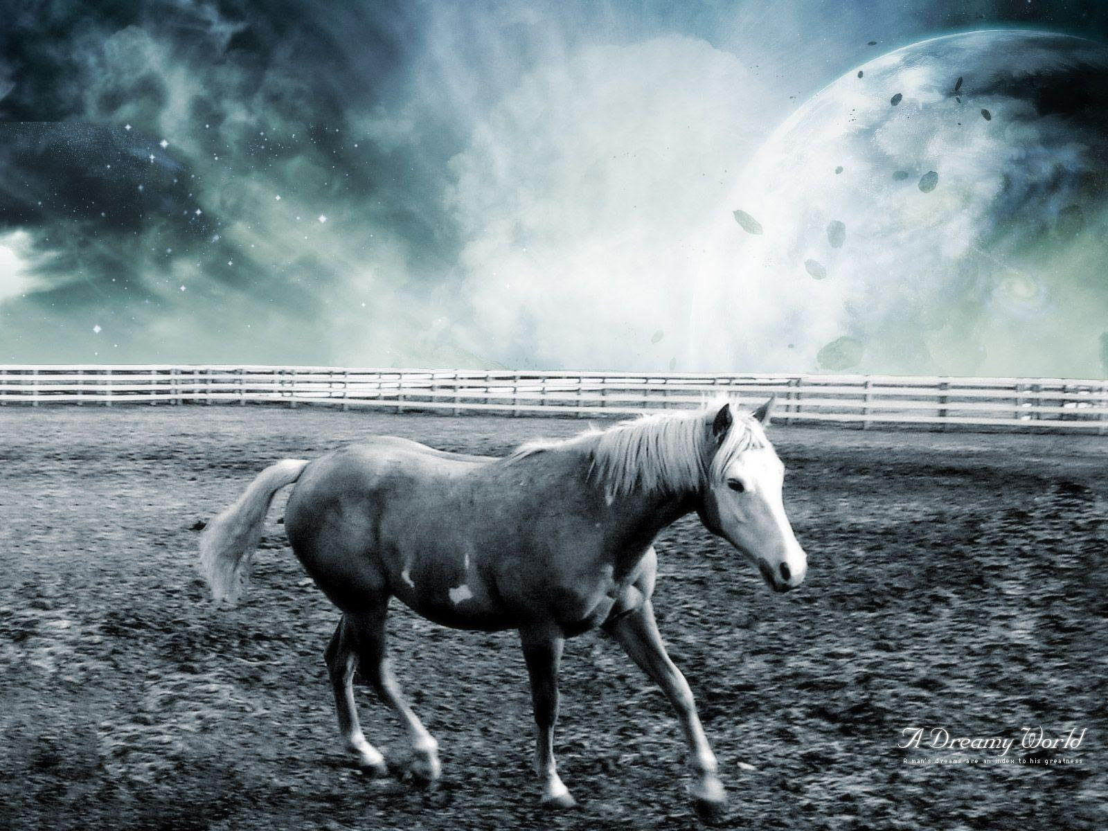 Images Of Free Horse Screensavers And Wallpapers Sc
