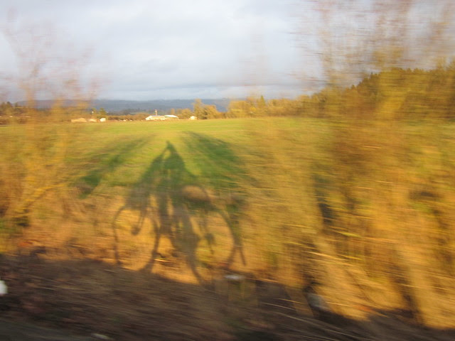 Playing with the shadows on Kuehne Rd