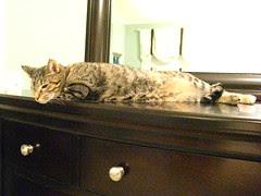 Maggie posing on the dresser