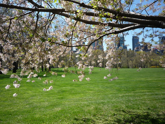 From a Spring Walk in Central Park