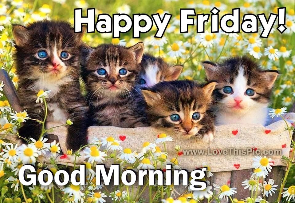 Happy Friday Cute Good Morning Quote Pictures Photos And Images