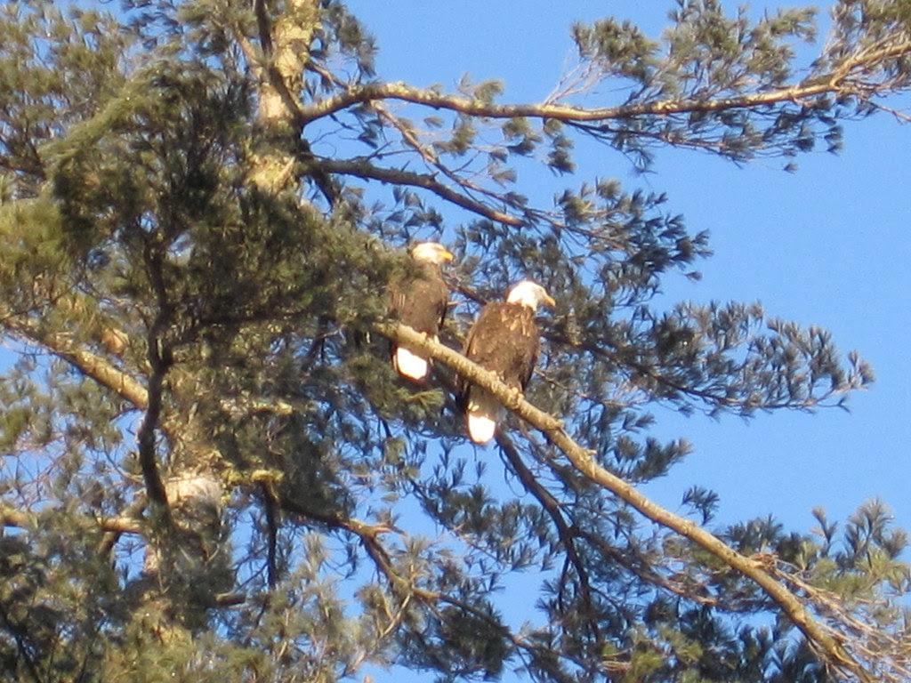 Our eagles, December 22