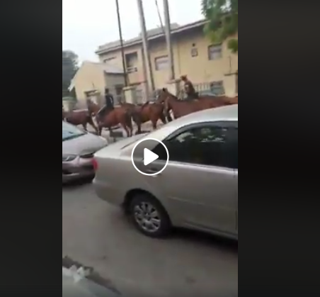Okada Ban: Nigerians react as horses are now used to convey Lagosians to their destinations